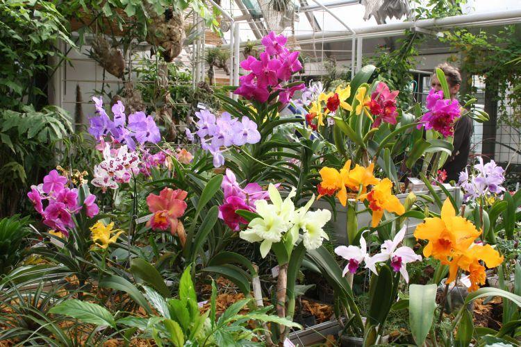 Botanická zahrada Přírodovědecké fakulty MU