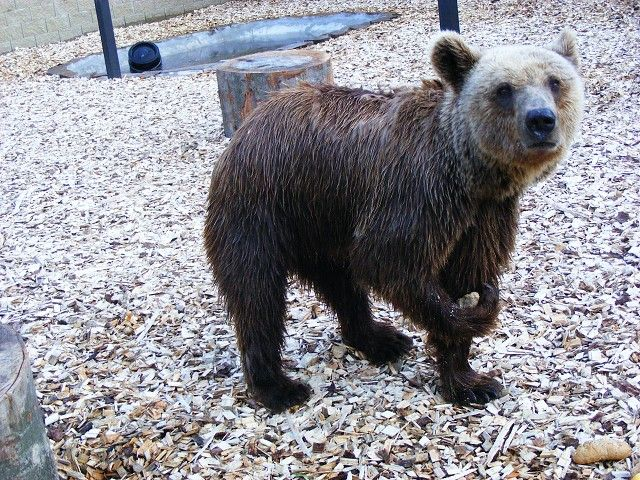 Park exotických zvířat Dvorec u Borovan