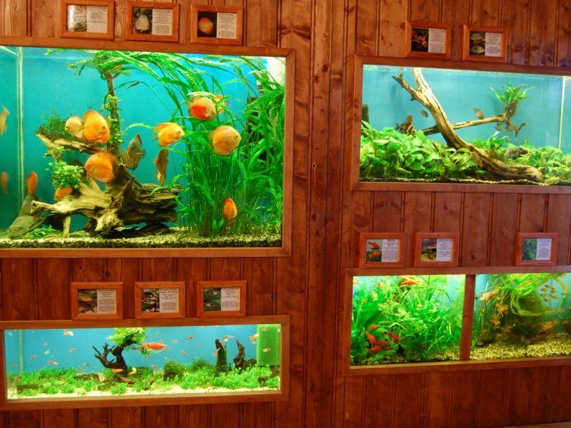 Rybí dům Chotěbuz