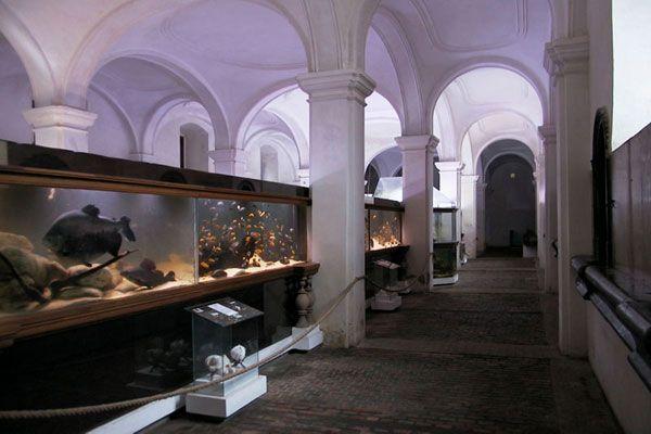 Akvárium Malawi Lednice