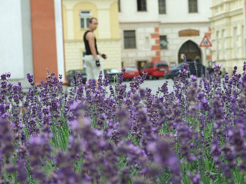 SVČ Brno - Lávka - Fotokroužek