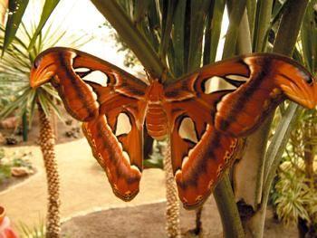 Schmetterlingshaus Jonsdorf - Motýlí dům Německo