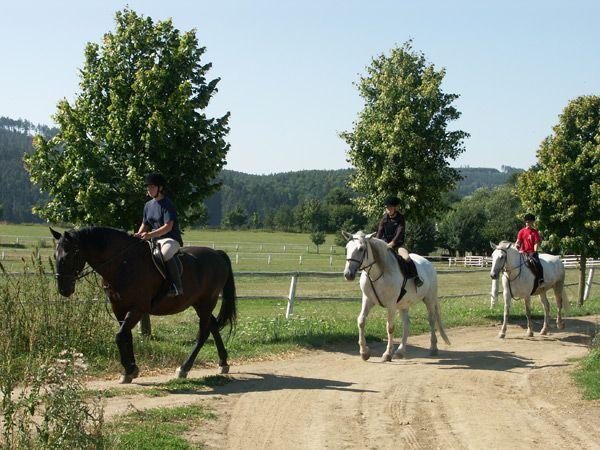 Hřebčín Favory - Vyjížďky na koních a výuka jízdy