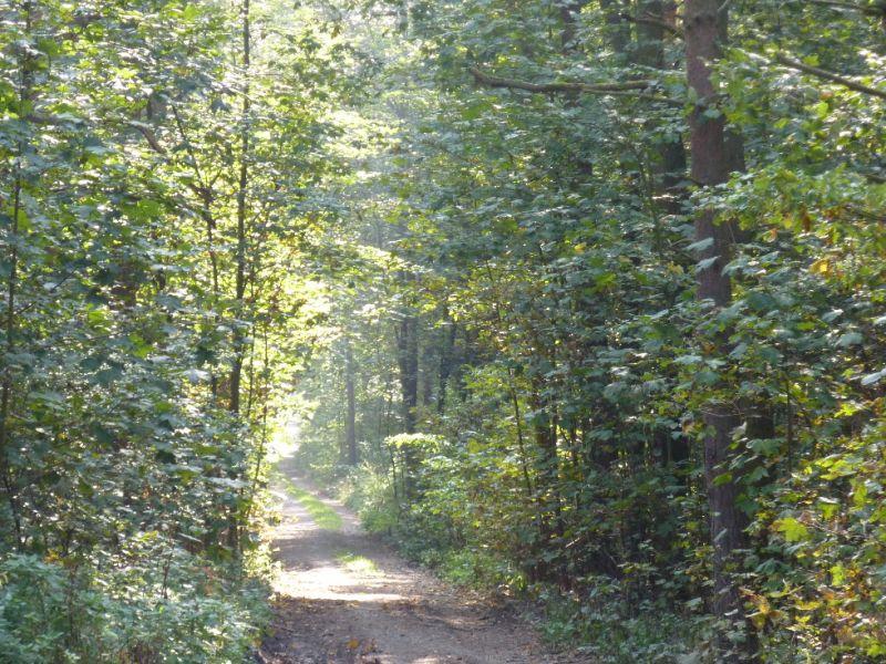 Trasa Plzeň-Černice - Radyně - Lesní cesta