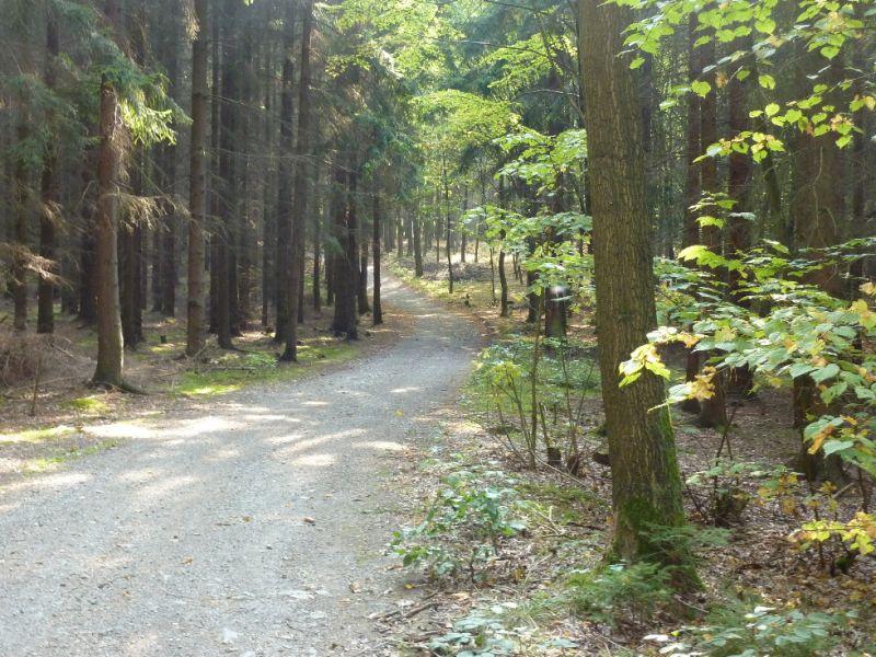 Trasa Plzeň-Černice - Radyně - Zpevněná lesní cesta