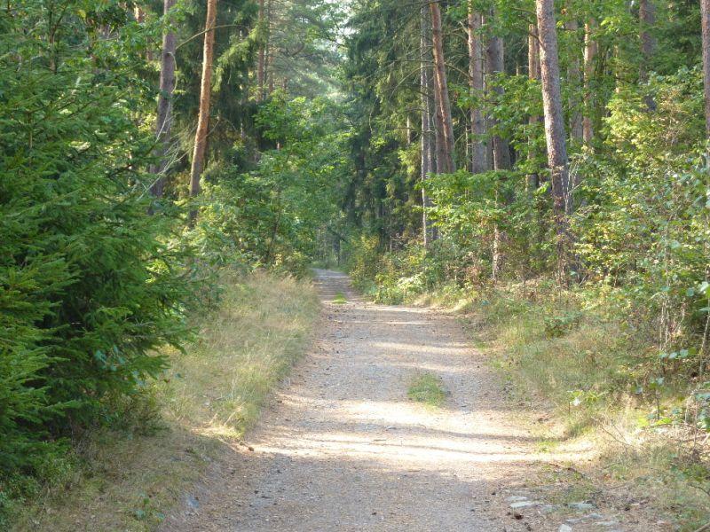 Trasa Plzeň-Černice - Radyně - Lesní cesta u Andrejšek