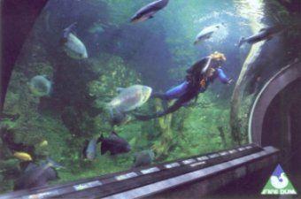 Obří akvárium Hradec Králové - Krmení ryb