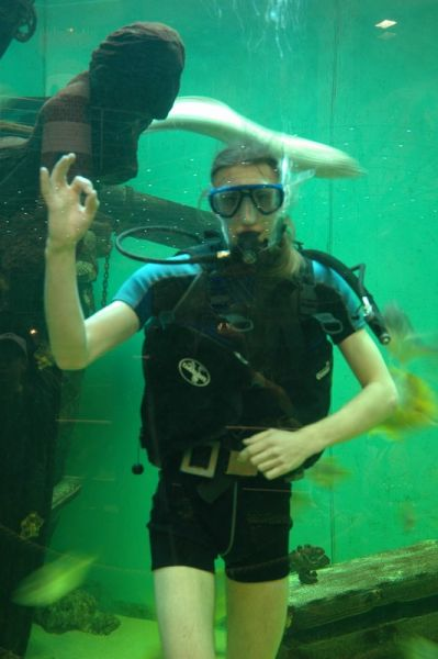 Mořský svět zvířat - Krmení žraloků