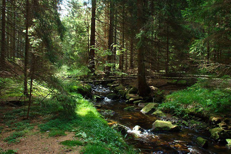 Naučná stezka Churáňov - Losenice