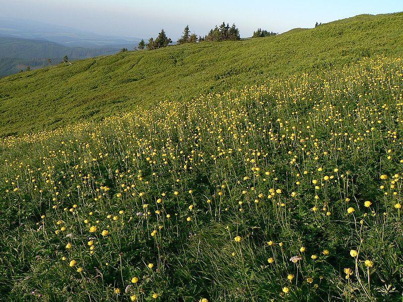 Naučná stezka Světem horských luk - Velká kotlina