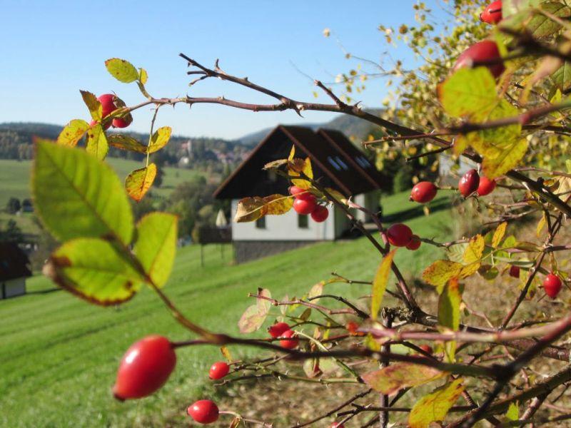 Barevný podzim na Broumovsku