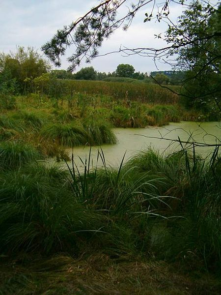 Drvotova stezka - Mokřady Záplavy Srby