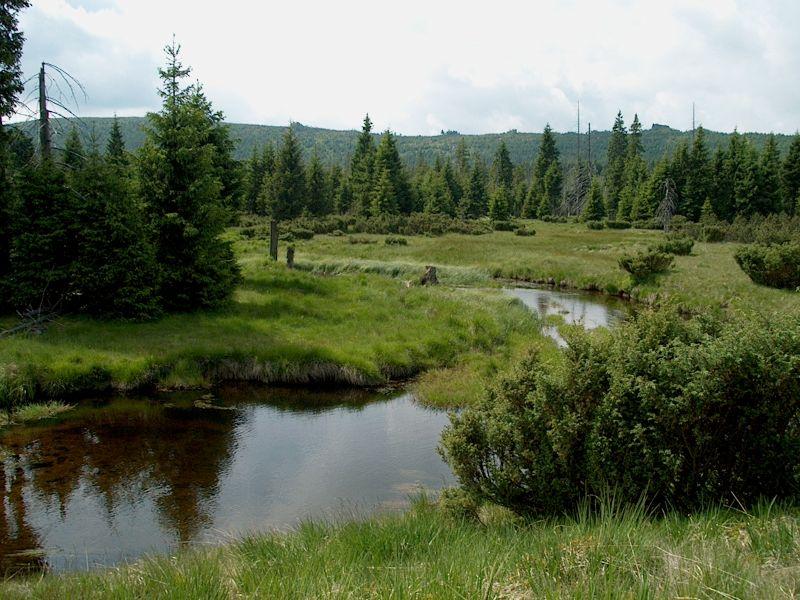 Na rašeliniště Jizery kolem Hnojového domu - Rašeliniště Jizery