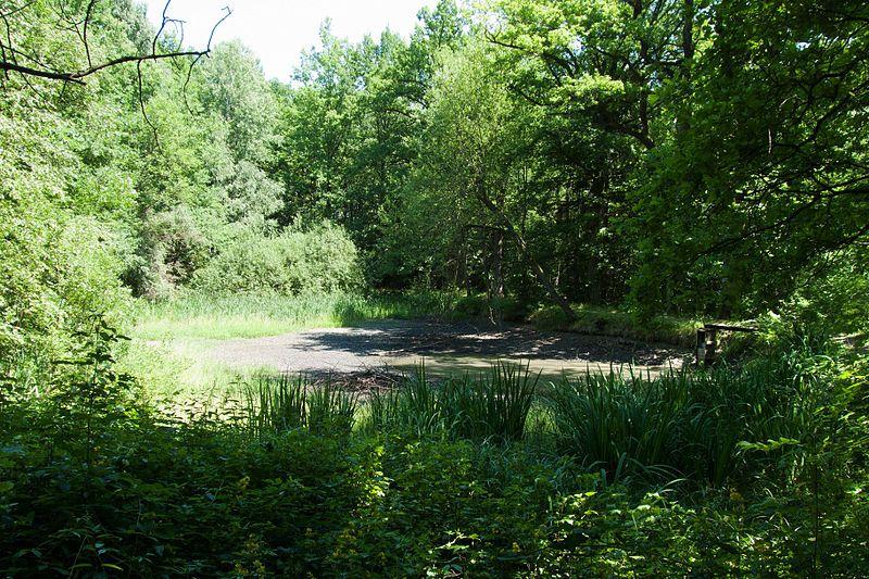 Grandlový rybník poblíž památníku Jana Žižky